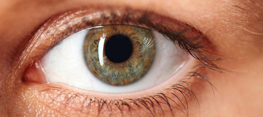 Сетчатка — сложнейшая структура органов зрения