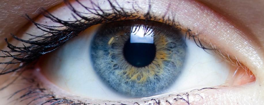 Роговица — один из органов человеческого глаза