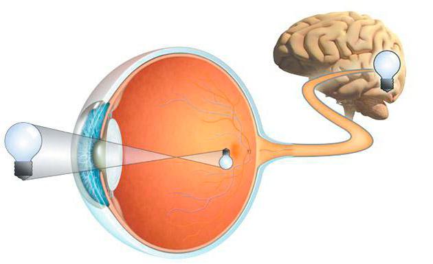Как вылечить атрофию глаз