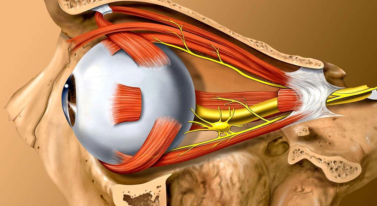Ретробульбарный неврит возникает из-за воспаления зрительного нерва