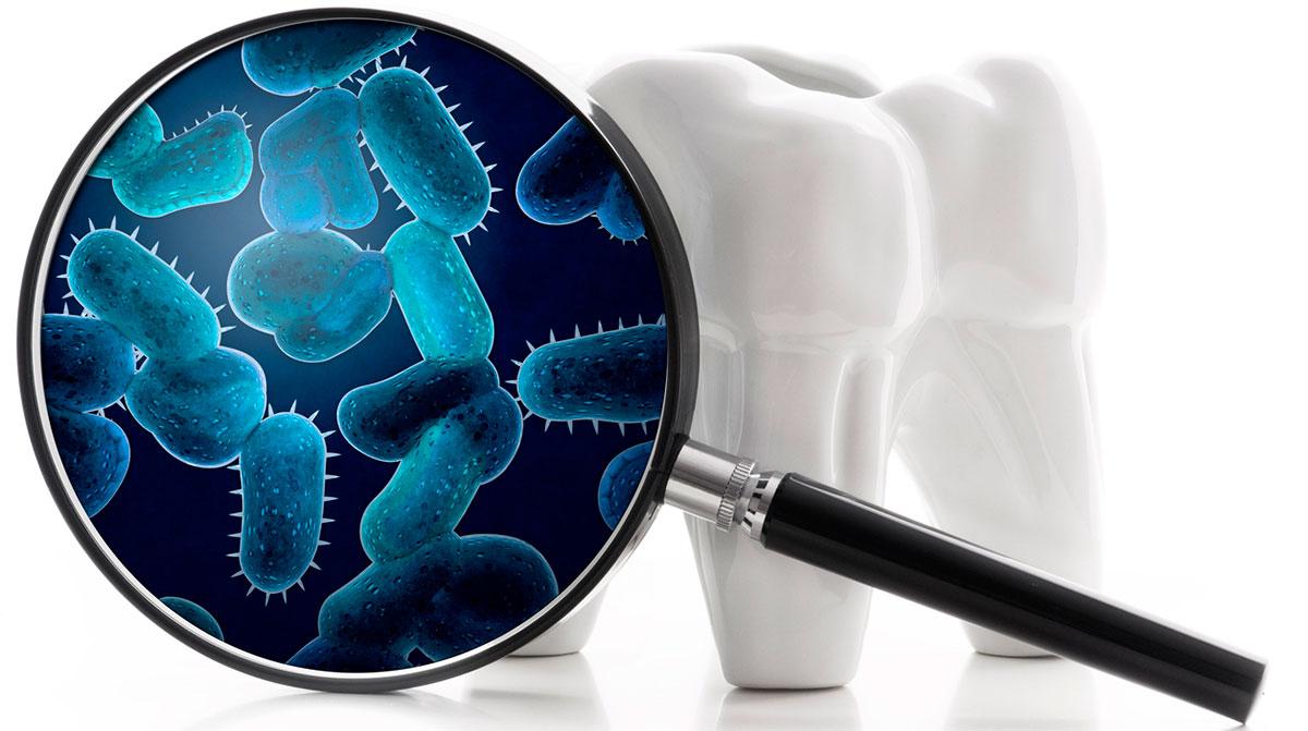 Кариесогенные бактерии
