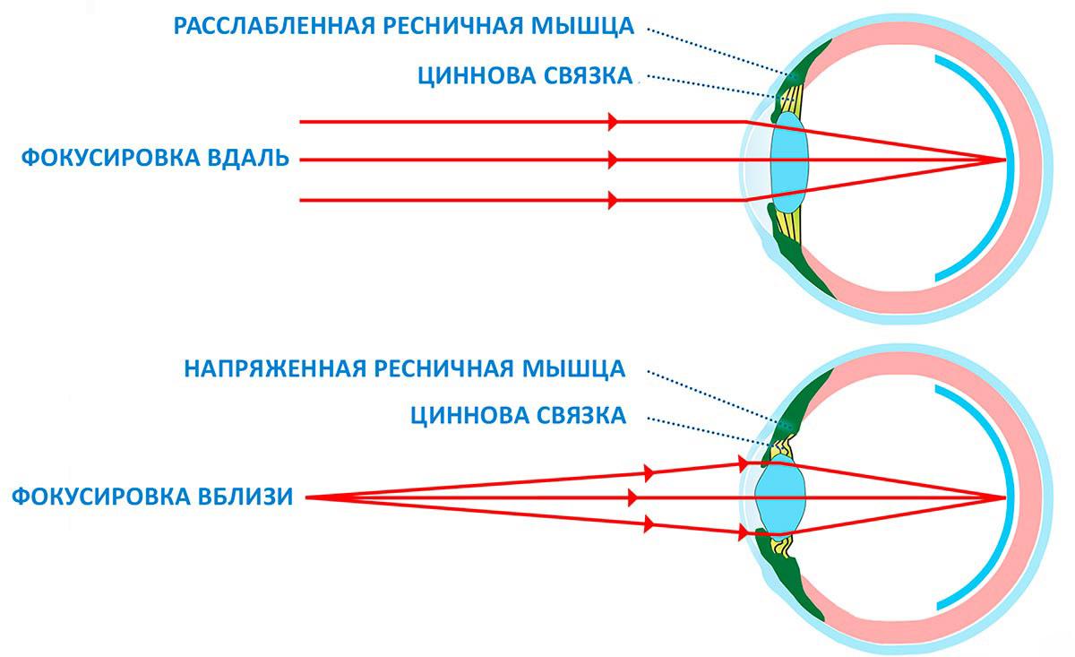 Глаза человека обладают способностью видеть на разных расстояниях