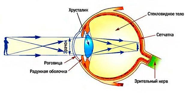 Изменения в глазном яблоке при близорукости thumbnail