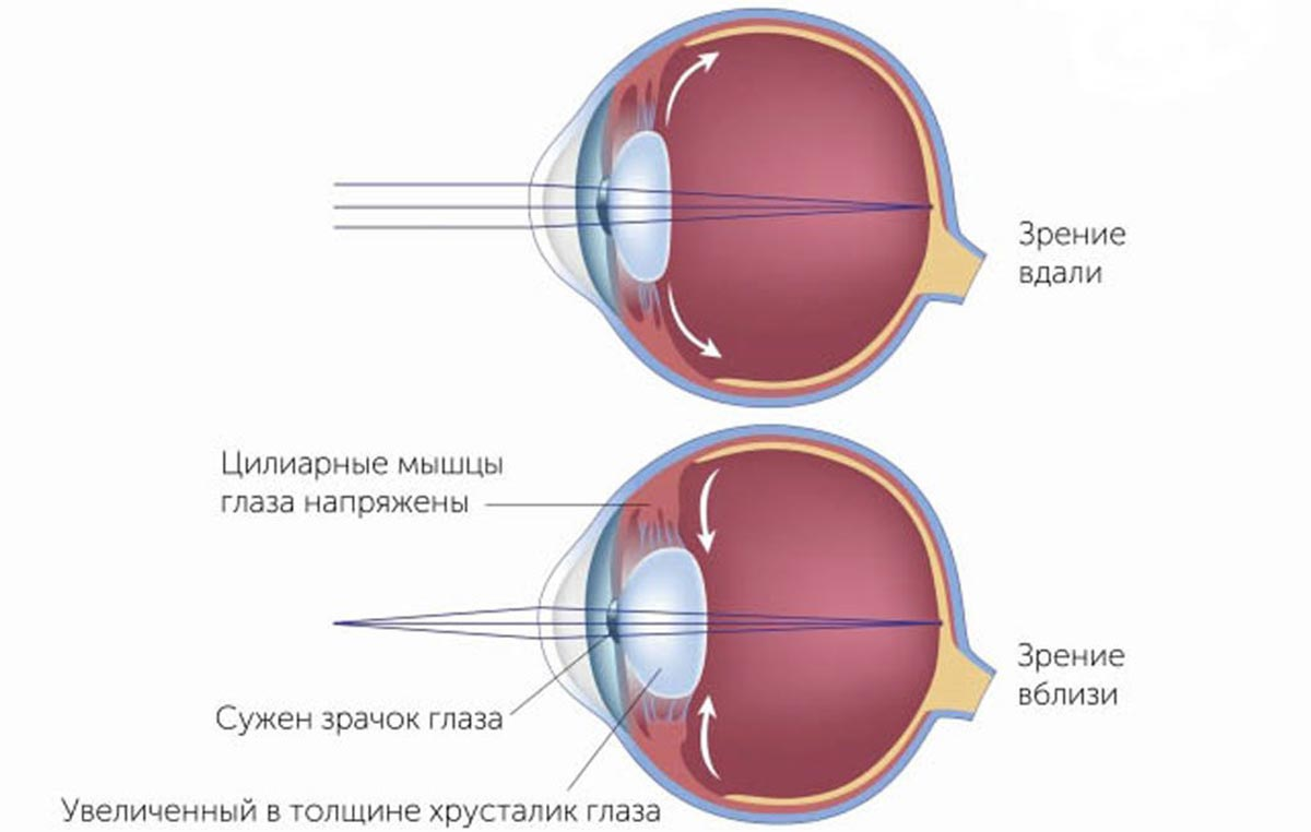 Оптическая система глаза человека практически совершенна и позволяет рассматривать предметы на разных расстояниях