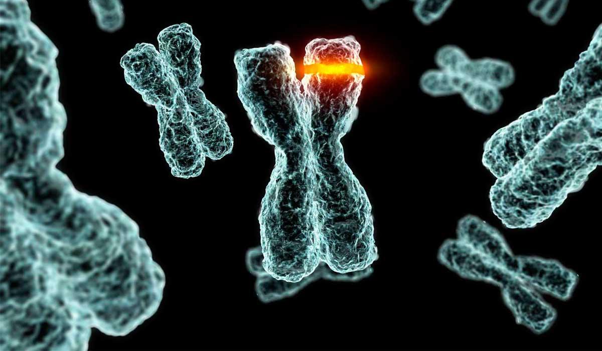 Передаются ли мутации по наследству